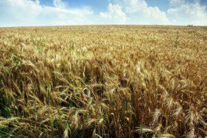 Polacy nie mają wątpliwości: PSL najlepiej dba o interesy rolników